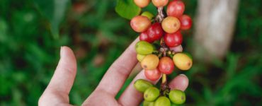 Best Green Coffee Beans